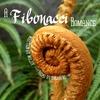 cover of a fibonacci romance